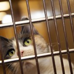 Adopt a Cat in Brooklyn A Tail at a Time
